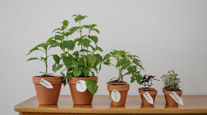 Zimowy ogródek na parapecie – porady dla początkujących