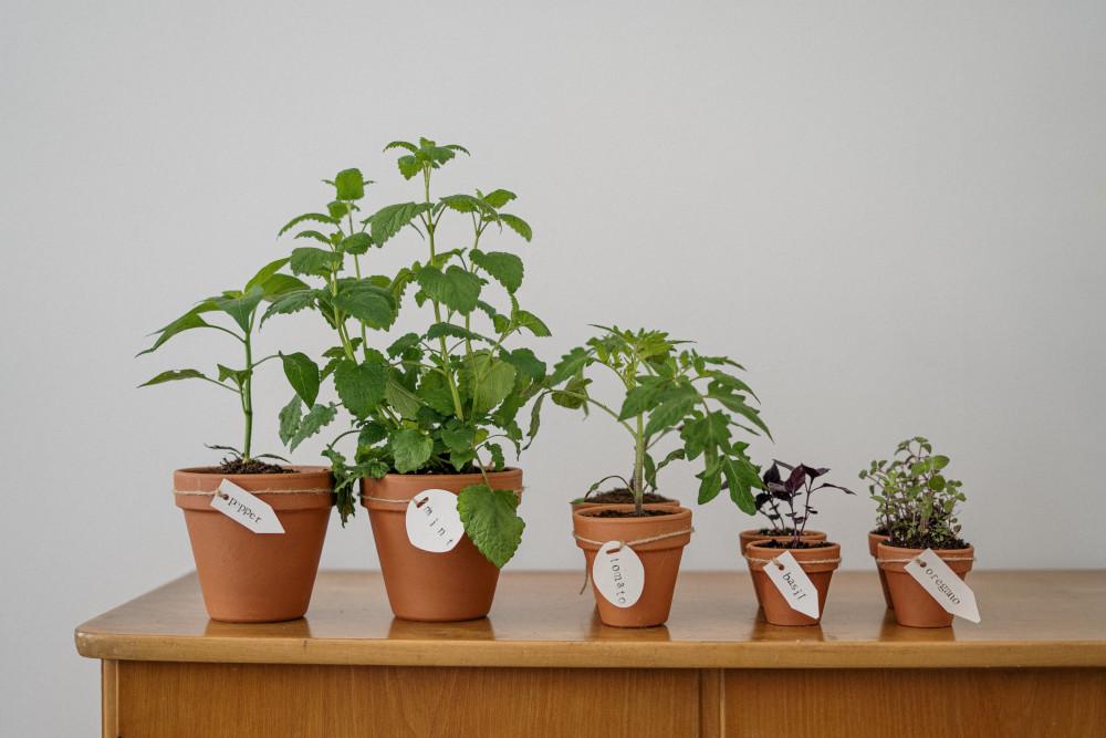 Zimowy ogródek naparapecie – porady dla początkujących